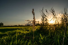 Цветок перед заходом солнца стоковая фотография
