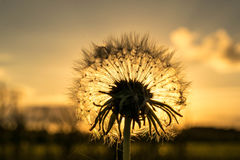 Цветок перед заходом солнца стоковое изображение
