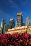 Цветок на CBD стоковая фотография