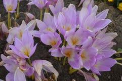 Цветок питомника осени Стоковые Фотографии RF