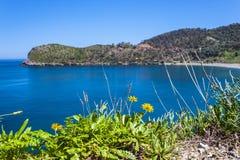 Цветок побережья Стоковое фото RF