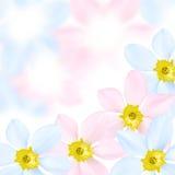 цветок покрашенный предпосылкой Стоковое Фото