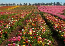 цветок полей Стоковые Фотографии RF