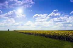 цветок полей Стоковые Изображения