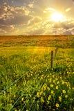 цветок поля загородки Стоковая Фотография