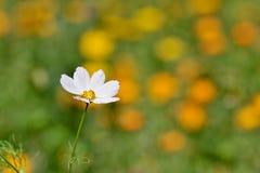 цветок поля Стоковое Изображение