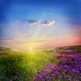 цветок поля Стоковая Фотография RF