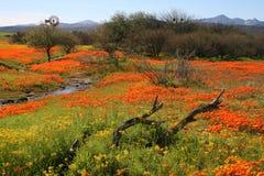 цветок поля Стоковое Изображение RF