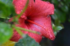 Цветок после дождя с капельками воды Стоковые Изображения
