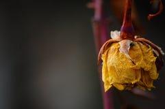 Цветок после зимы в саде Стоковые Изображения RF