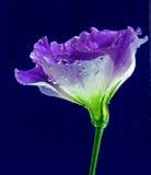 Цветок под водой Стоковое Фото