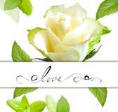 цветок поднял Стоковая Фотография RF