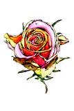 Цветок поднял бесплатная иллюстрация