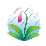 Цветок под дождем Стоковое фото RF