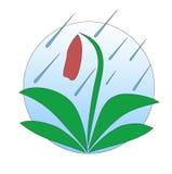 Цветок под дождем Стоковое Изображение