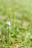 Цветок поля на длинном черенок Стоковое Изображение