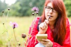 Цветок поля против брюнет Стоковая Фотография