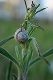 Цветок поля с улиткой Стоковая Фотография RF