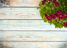 Цветок предпосылки весны свежий на голубой предпосылке Стоковые Фотографии RF