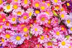 цветок предпосылки красивейший Пук цветков Праздничный цветок co Стоковое Изображение RF