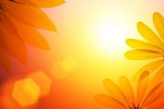 цветок предпосылки флористический Стоковые Фото