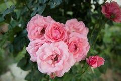 цветок предпосылки красивейший Изумительный взгляд яркой Стоковое фото RF