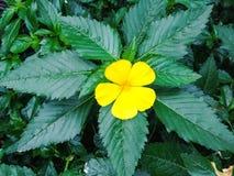 цветок предпосылки красивейший Стоковые Изображения RF