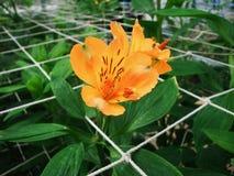 цветок предпосылки красивейший Стоковые Изображения