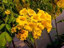 цветок предпосылки красивейший Стоковая Фотография RF