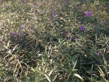 цветок предпосылки красивейший Стоковая Фотография