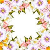 цветок предпосылки свежий Стоковые Фотографии RF