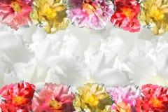 Цветок предпосылки сладостный розовый, искра и опорожняют центральный космос для текста или передний план с путем клиппирования Стоковые Фото