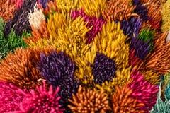 цветок предпосылки цветастый Стоковые Фотографии RF