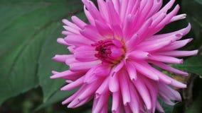 Цветок принял в дендропарк Ноттингем Великобританию Стоковое Изображение RF