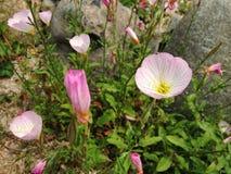 Цветок принятый в s Корея Стоковая Фотография