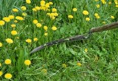 Цветок, природа, желтый цвет, весна, цветки, трава, лето, зеленый цвет, луг, поле, завод, сад, одуванчик, флора, цветение, красот Стоковые Изображения RF