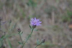 Цветок природы Стоковое Изображение RF