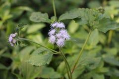 Цветок природы стоковое фото