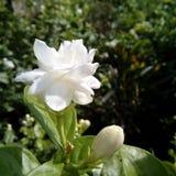 Цветок природы стоковое изображение