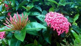 Цветок против безупречного цветка Стоковое Фото