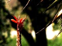 Цветок против терниев Стоковая Фотография RF