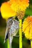цветок птицы подавая Стоковые Фото