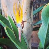 Цветок птицы Стоковые Изображения RF