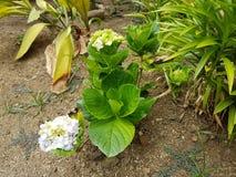 цветок пука Стоковые Фотографии RF