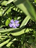цветок пурпуровый определяет Стоковые Фото