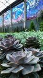 Цветок пустыни Стоковые Изображения RF