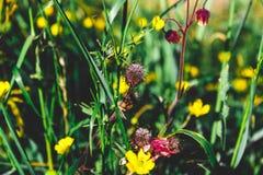 цветок пушистый Стоковая Фотография