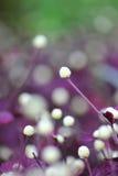 Цветок пятна Стоковые Изображения RF