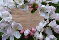 Цветок, рамка, маргаритка, природа, белизна, весна, флористическая, цве стоковое фото