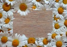 Цветок, рамка, маргаритка, природа, белизна, весна, флористическая, цве стоковое фото rf